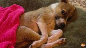 They Brought This Puppy Home To Die In Peace But She Shocked Them All