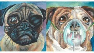 Artist Paints Breed Portraits To Show How Purebred Standards Hurt Dogs