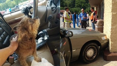 Two Dogs Take Owner's Parked Car For A Joyride And Crash Into Wal-Mart
