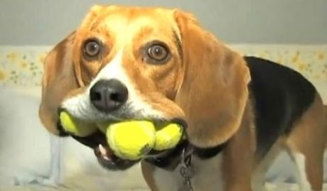 Your Daily Dose Of Funny Dogs [VIDEO]