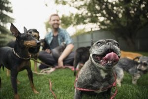 Top 10 Tips To A Healthier Dog