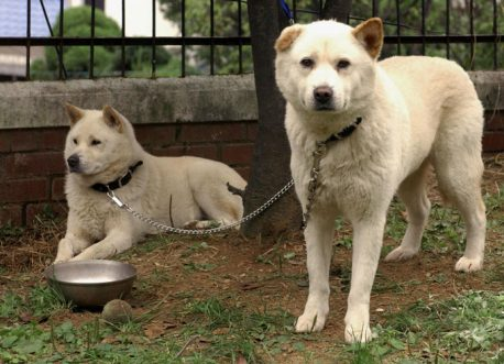 Don't Fool Yourself: Animal Neglect Is Animal Abuse