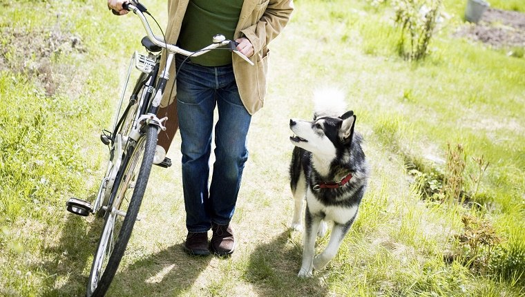 Man walking bike next to Husky