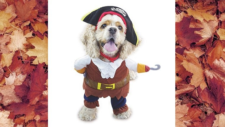 dog-costumes-2016-pirate
