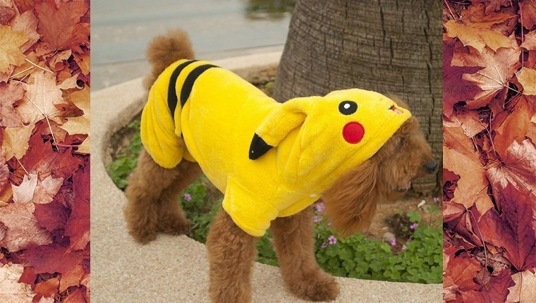 dog-costumes-2016-pokemon