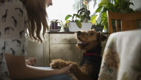 6 Ways To Connect With Your Dog On A Deeper Level