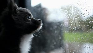 5 Ways To Keep Your Dog Mentally Stimulated On A Rainy Day