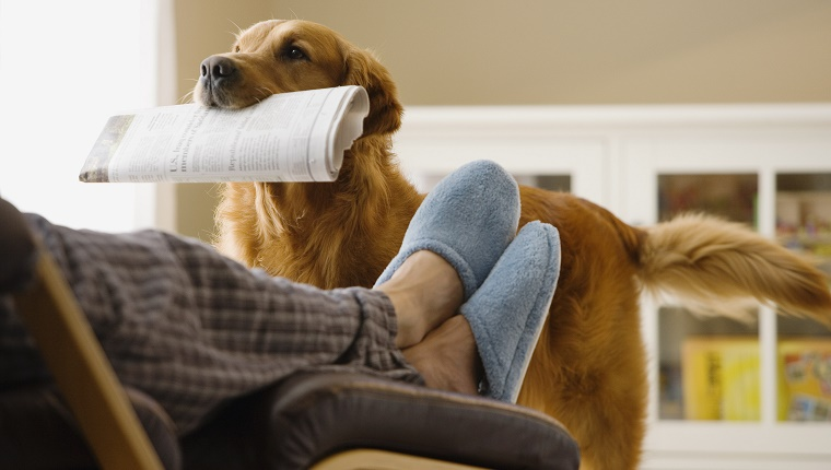 Dog bringing newspaper to owner