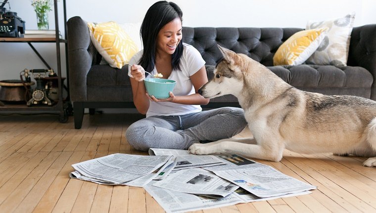 Young woman sitting on floor eating breakfast watched by husky dog
