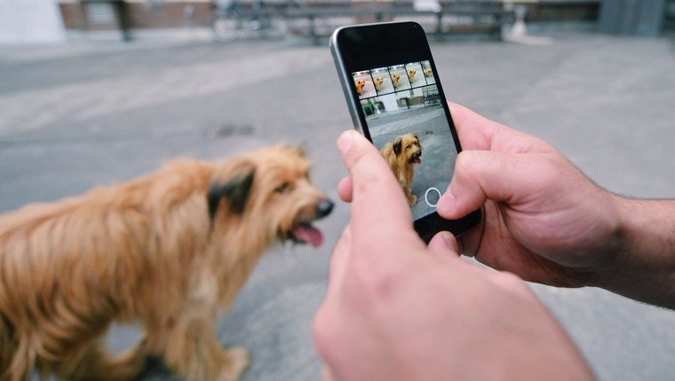 Person Taking Picture Of Dog With Mobile Phone