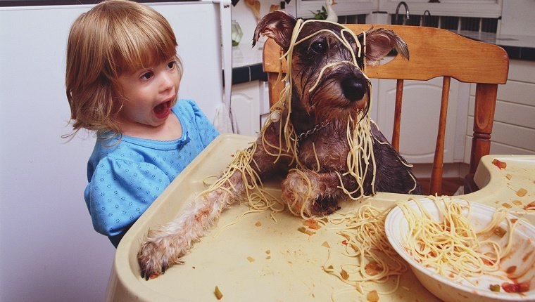 Dog in high chair with spaghetti