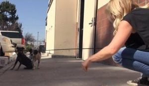 First Their Owner Dies Then They Are Thrown Out On The Street [VIDEO]