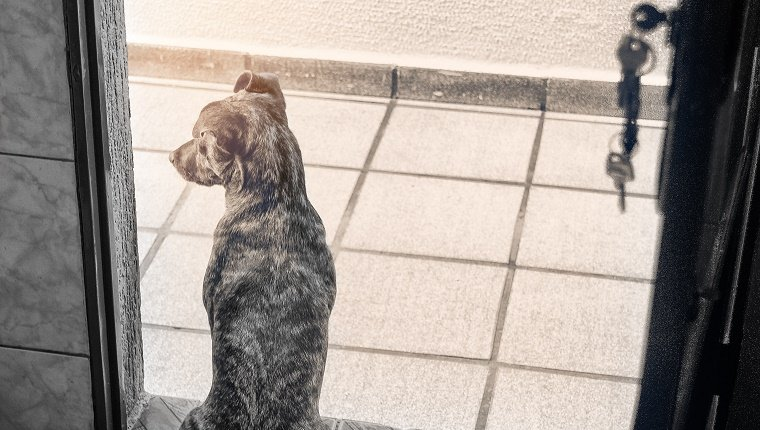 Mutt dog waiting for his owner at the door. Post processing with Lightroom, Photoshop and Nick Software.