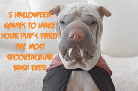 5 Halloween Games To Make Your Pup's Party The Most Spooktacular Bash Ever