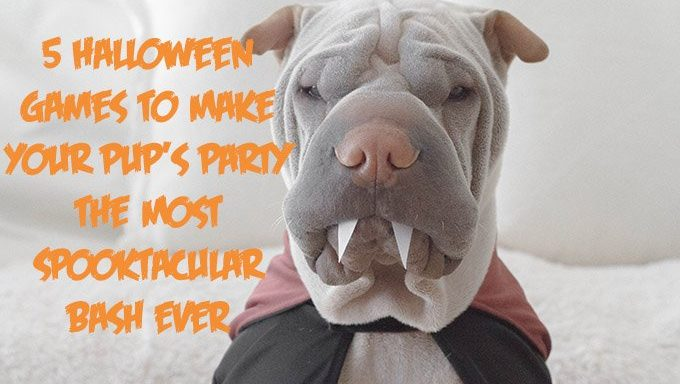 shar pei with vampire teeth and cape for halloween