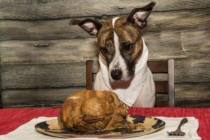 How To Prepare A Dog Friendly Thanksgiving Feast You Can All Eat