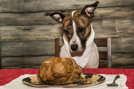 How To Prepare A Dog-Friendly Thanksgiving Feast You Can All Eat