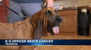National Pet Cancer Awareness Month: 10 Stories Of Survival