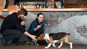 8 Fun And Cheap Dates You Can Go On With Your Dog