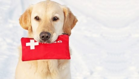 9 Things You Need If You Are Traveling With Your Dog Over The Holidays