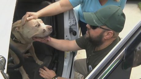 Community Helps Find Officer's Missing Dog After Armed Burglary