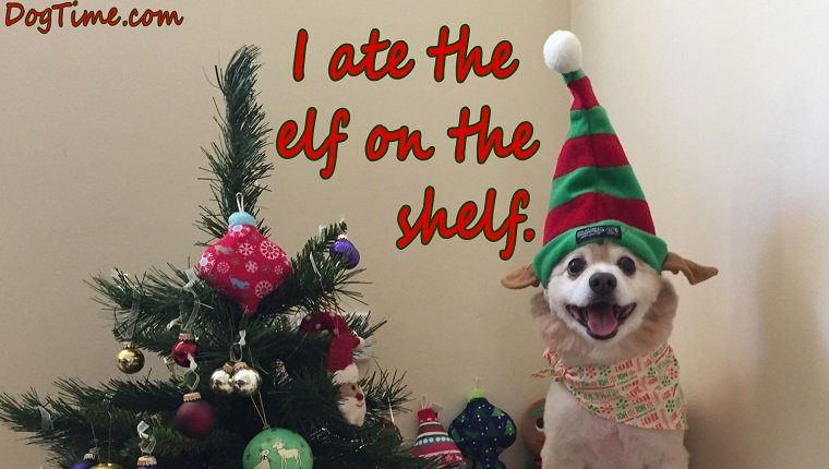 """christmas e-cards. dog in christmas hat. reads """"i ate the elf on the shelf"""""""