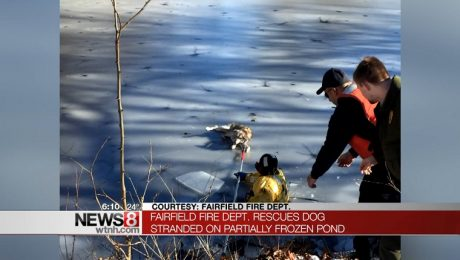 Fire Department Rescues Senior Dog Stuck On Dangerous Icy Pond