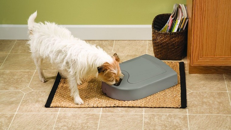 dog-gadgets-gift-guide-5
