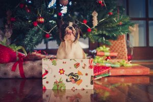 What Not To Say To Someone Getting A Puppy For Christmas