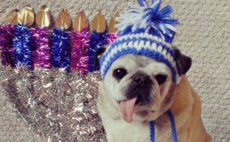 Chag Sameach! 20 Adorable Hanukkah Dogs [PICTURE GALLERY]