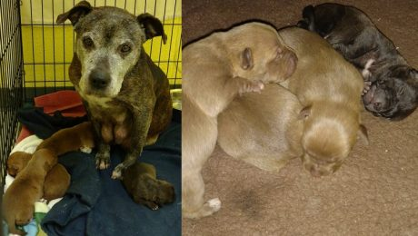 Mama Dog And Her 4 Newborn Puppies Rescued From Snowstorm