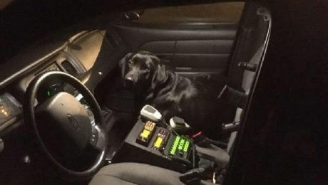 Dog Lost On A Cold Night Sneaks Into Police Car To Get A Ride Home
