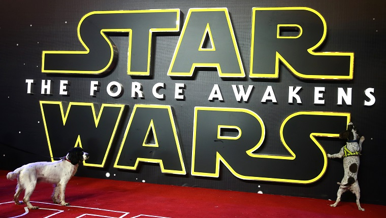 "Search handler's dogs check the red carpet ahead of the European Premiere of ""Star Wars The Force Awakens"" in central London on December 16, 2015. Ever since 1977, when ""Star Wars"" introduced the world to The Force, Jedi knights, Darth Vader, Wookiees and clever droids R2-D2 and C3PO, the sci-fi saga has built a devoted global fan base that spans the generations. AFP PHOTO / JUSTIN TALLIS / AFP / JUSTIN TALLIS"