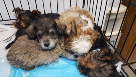 Over 100 Pet Store Puppies Rescued From Truck Accident 'Returned To Owner'
