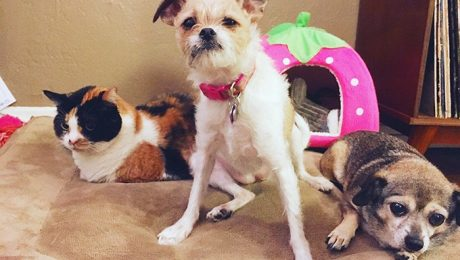 6 Tips To Manage A Large Pet Family In A Small Home