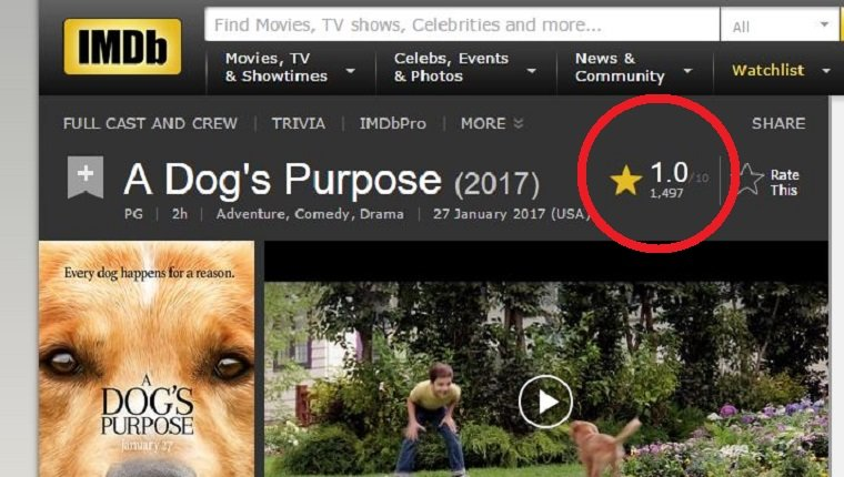 a-dogs-purpose-7