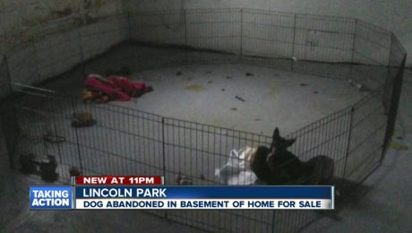 Realtor Fired After Calling Police About Abandoned Dog In Basement Of Vacant Home