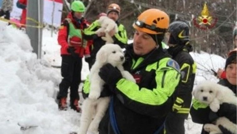 ABRUZZO, ITALY - JANUARY 23: A handout photograph provided by the Italian Fire Department shows rescue crews hold pets as they make search and rescue works in the area of the hotel Rigopiano, which was hit by a massive avalanche due to earthquakes on 18 January in central Italy, in Farindola, Abruzzo region, Italy, on January 23, 2017. (Photo by Vigili del Fuoco/Handout/Editorial Use Only/Anadolu Agency/Getty Images)