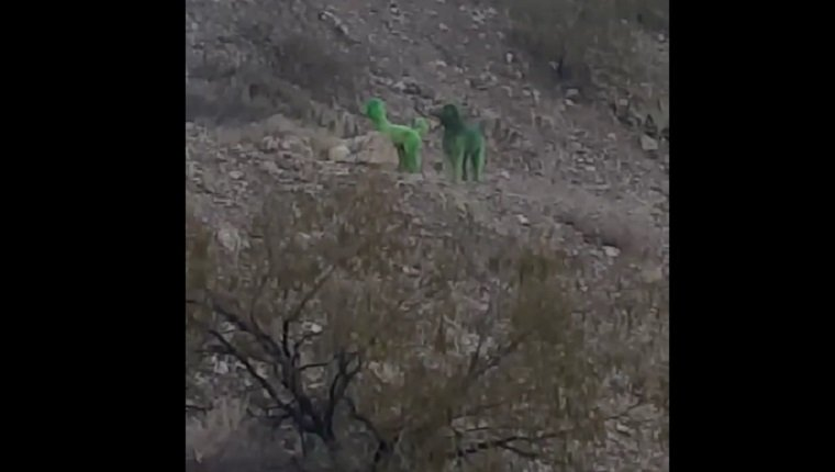 green-poodles-spotted-mountain-3