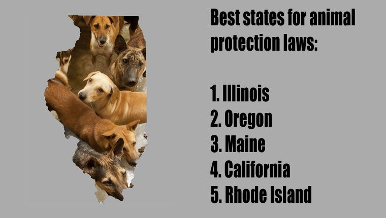 top-states-animal-protection-2