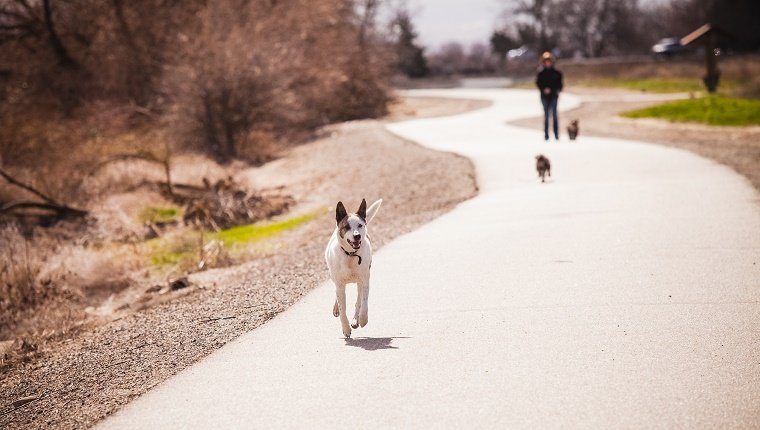 Dogs running loose along a concrete sidewalk pathway. One larger white dog in foreground, and two small black dogs in the background. High resolution color photo with horizontal composition and room for copy.
