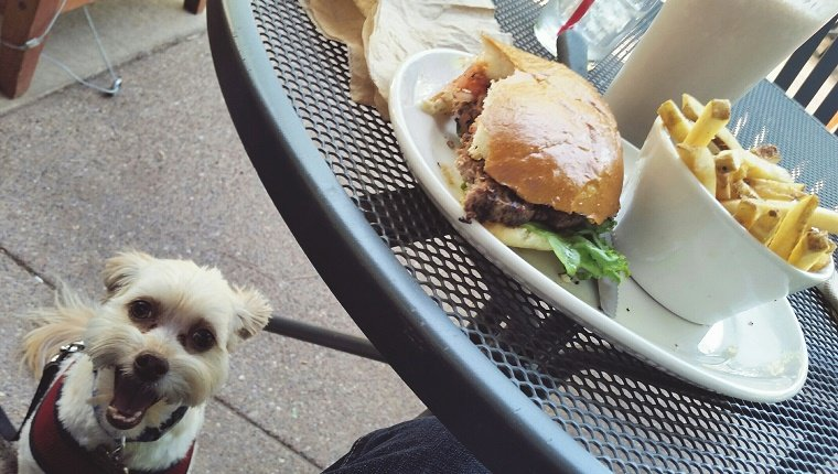 Portrait Of Dog By Table With Hamburger
