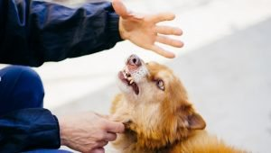 STUDY: Dogs Don't Like It When You're Rude And Unhelpful