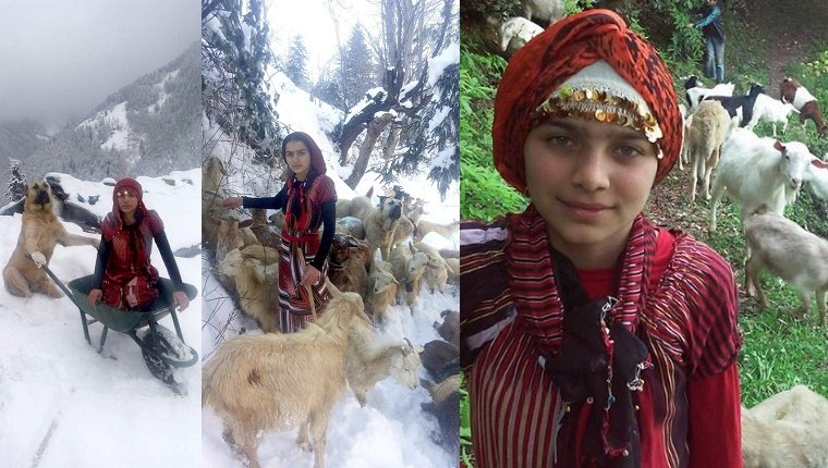 goatherder-girl-and-dog-save-goats-3