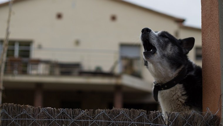 How Do You Get Your Neighbor's Dog To Stop Barking? - Dogtime