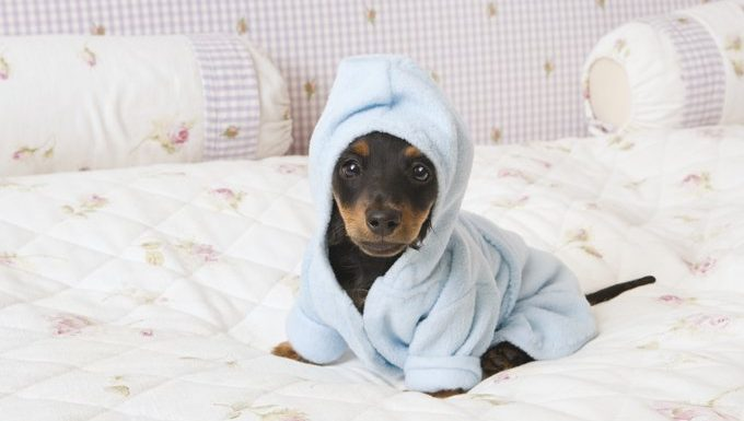 puppy in pajamas on a bed