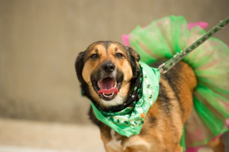 St. Patrick's Day Safety Tips For Your Pup