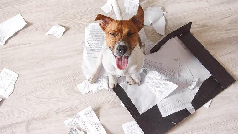 Bad dog sitting on the torn pieces of documents with eyes closed. Naughty pets at home. Bad puppy waiting for punishment
