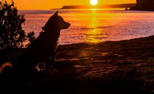 Dogs On Epic Outdoor Adventures [PICTURE GALLERY]