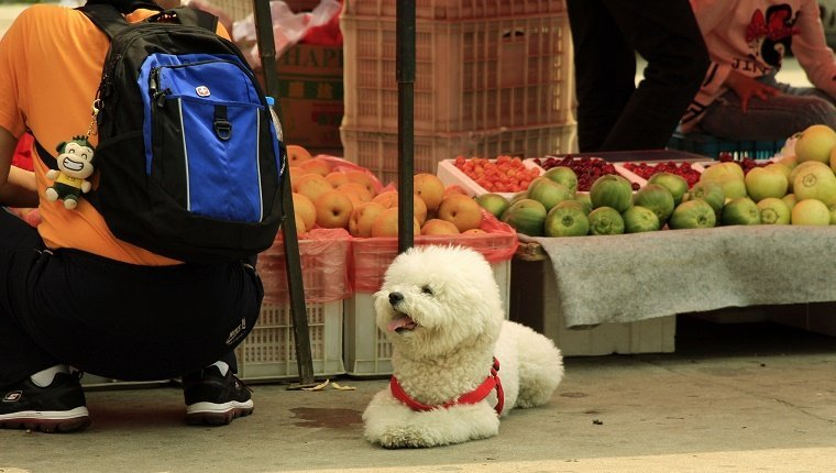 Dog With Owner At Fruit Market